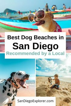 Taking your dog to the beach soon? In San Diego, you have quite a few choices. So here are my recommendations for the best San Diego Dog Beaches so you can pick the best one for you and your pup. Dog friendly things to do in San Diego - San Diego Dog Beach - San Diego Beaches - San Diego pet friendly - San Diego Things To do - San Diego with pets - Beaches San Diego - San Diego Itinerary