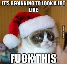 I survived grumpy cat humor, funny cat memes, funny cats, hilarious, memes Beautiful Christmas Greetings, Merry Christmas Wishes Text, Short Christmas Wishes, Funny Christmas Messages, Funniest Cat Memes, Funny Grumpy Cat Memes, Hilarious Memes, Funny Cats, Christmas Cat Memes
