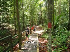 The plank walk to the longest and toughest (within Lambir National Park, Miri, Sarawak) trail to the top of Bukit Lambir (465 metres) with a superb view of the rainforest.