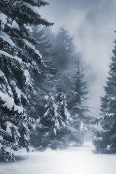 Misty forest covered in snow Winter Szenen, Winter Love, Winter Magic, I Love Snow, Winter's Tale, Snow Scenes, Winter Beauty, Belle Photo, Photos