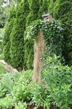 Gnome Tree Stump House, Birds And The Bees, Tree Carving, Tree Trunks, Garden Trees, Potting Soil, Flower Planters, Bird Houses, Curb Appeal