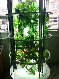 Juice plus tower garden! #aeroponic #sustainable #growlights www.nikkiskidmore.towergarden.com