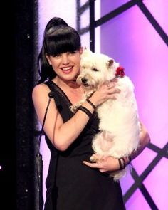 Pauley Perrette and cute Terrier (Westie or Cairn?) at the Hallmark Dog Awards in Westies, Westie Puppies, Cute Dog Pictures, Dog Photos, Cute Little Dogs, Cute Dogs, Pauley Perrette, Celebrity Dogs, White Terrier