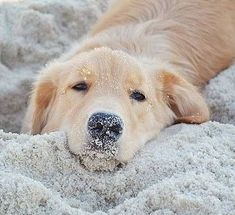 Sandy pup.  He looks relaxed like I am at the beach :)