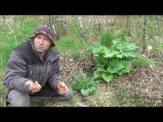 Pourquoi et comment utiliser la consoude Permaculture Design, Flash Photography, Photo Checks, Vegetable Garden, Garden Sculpture, Flora, Planters, Outdoor Decor, Green