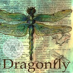 flying shoes art studio: DRAGONFLY