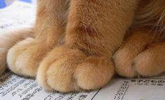 Kitty feets.