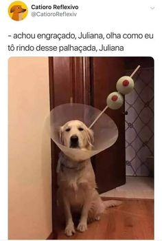 I have no idea what this says but the dog looks cute. Memes Humor, Funny Animals, Cute Animals, New Hope Club, Dog Halloween, Bad Mood, Character Outfits, Wtf Funny, Funny Posts