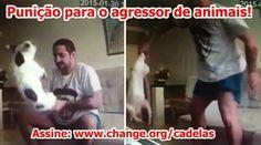 """""""O GRITO DO BICHO"""": Punição para o agressor de animais. #ogritodobicho#falabicho"""