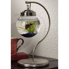 Hanging aquarium... http://www.opulentitems.com/homedecor/aquariums/hanging-aquarium.html