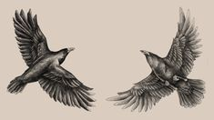 Huginn_and_Muninn_by_Saevus.jpg 1,080×607 pixels