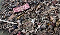 9/11 Bodies | Feed Your Eyes: MOST SADDEST THING-This is NOT 9-11. It is a tsunami!!!