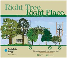 Great resources for Cadettes working on their Trees badge: tree benefits, where to plant them, how to trim/prune and more