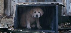 Schattigste puppy-reclame van het jaar.