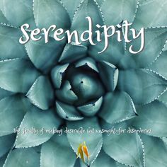 beautiful words from Macquarie Dictionary - serendipity - the faculty of making desirable but unsought-for discoveries. Serendipity, Beautiful Words, Language, How To Make, Blog, Other, Tone Words, Pretty Words, Languages