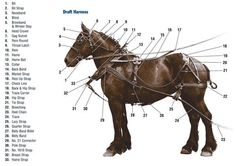 Homemade Horse Harness Discuss Home Made Simple Harness