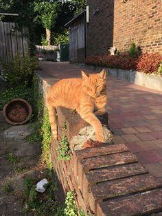 Ginger kittie