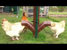 Comment réaliser une mangeoire double entrées. Poules/PVC/Facile. - YouTube