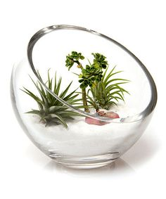 Take a look at this Glass Bowl Terrarium by Chive on #zulily today     Love the white sand with the succulants