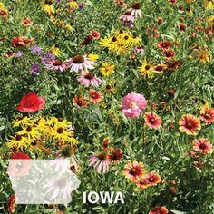 Idea Of Making Plant Pots At Home // Flower Pots From Cement Marbles // Home Decoration Ideas – Top Soop Prairie Planting, Prairie Garden, Sun Garden, Iowa, Planting Flowers From Seeds, Best Perennials, Shade Perennials, Flowers Perennials, Shade Plants
