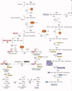 Chapter 21 : Biosynthesis of Amino Acids, Nucleotides, and Related Molecules made easy totl diagram