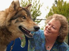 Cathy Currea chatting with a wolf from Never Cry Wolf Rescue and Adoption. Cathy is able to communicate with all species, humans included!