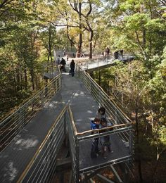 a-view-from-the-top-gardenista-Metcalfe-Architecture-Design-tree-walk-philadelphia