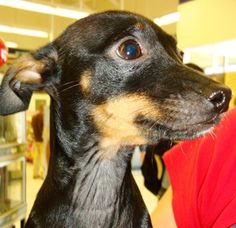 Close up puppy face looking afraid - Image Copr. Amy Shojai, CABC