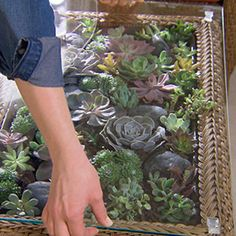 Make a beautiful terrarium table out of the Charlottetown Coffee Table from the Martha Stewart Living™ Collection at The Home Depot.