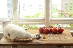 Roast Tomato Soup Recipe, Roasted Tomato Soup, Tomato Soup Recipes, Roasted Tomatoes, Vegetables, Food, Tomato Soup, Essen, Vegetable Recipes