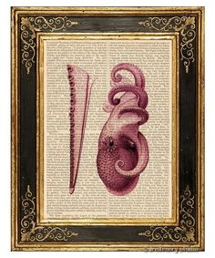 Plum Octopus #12 Art Print on Antique Book Page Vintage Illustration Tentacles