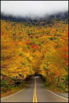 Autumn tree tunel - Vermont