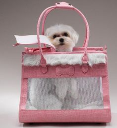 Pet Carriers and Carrier Purses for Small Dogs Dog Purse, Cat Carrier, Dog Carrier Purse, Pet Bag, Bandanas, Dog Pattern, Dog Accessories, Yorkshire Terrier, Beautiful Dogs