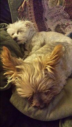 Cappy and Sookie sleeping ♡♡♡