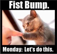 These Cats Hate Mondays Just Like Us, Humans (Memes) - I Can Has Cheezburger? humor These Cats Hate Mondays Just Like Us, Humans (Memes) 9gag Funny, Funny Monday Memes, Cat Memes, Funny Memes, Memes Humor, Happy Monday Funny, Happy Monday Quotes, It's Monday Meme, Monday Morning Humor