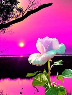 Beautiful Rose Flowers, Elegant Flowers, Picture Borders, Wallpaper Nature Flowers, Moon Rise, Moonlight, Nature Photography, Bloom, Iphone Wallpapers