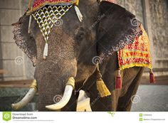 Decorated Elephant - Download From Over 43 Million High Quality Stock Photos, Images, Vectors. Sign up for FREE today. Image: 31895094