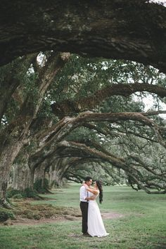 Oak Alley Plantation THESE TREES!  OMG I love these trees!