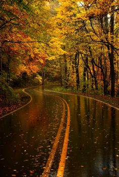 Yellow Leaf Road at the Great Smoky Mountains National Park in North Carolina.