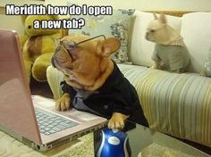 """""""Meredith, how do I open a new tab?"""", Funny French Bulldogs and a computer."""