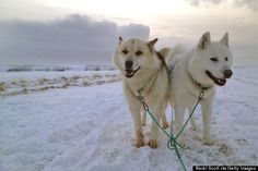 You can go dog-sledding | 27 Reasons Iceland Is The Most Wonderful Country To Ever Exist