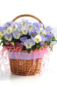The Best Kind of Easter Basket!
