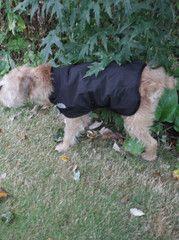 North Face Dog Coats  58c5abf52