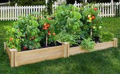 Looking for raised garden bed plans for a vegetable garden? Enjoy fresh vegetables with these raised garden bed plans for a year-round vegetable garden! Cedar Raised Garden Beds, Raised Bed Garden Design, Starting A Vegetable Garden, Backyard Vegetable Gardens, Vegetable Garden Design, Raised Beds, Cedar Garden, Garden Tomatoes, Tomato Garden