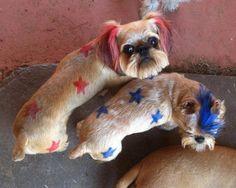 Dog Hair Dye Information   Dog hair dye, Hair dye and Dog