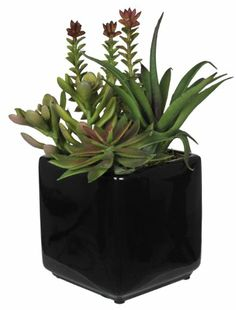 House of Silk Flowers Artificial Succulent Garden (B) in Black Cube Vase