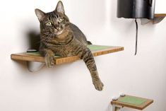 Stylish cat perch Modern Pet Decor And Supplies For Your Furry Friend Rustic Cat Furniture, Pet Furniture, Furniture Ideas, Furniture Design, Cat Tipi, Cat Habitat, Herding Cats, Cat Plants, Cat Perch