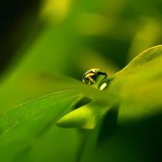 Photosynthesis by ~Sortvind on deviantART