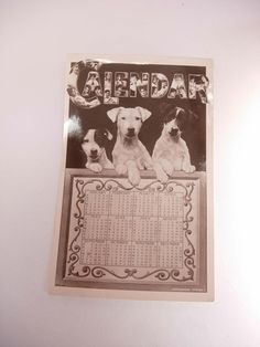 Antique RPPC Real Photo Postcard 1908 Calendar Jack Russell Terrier Rotograph Dog. $35.00, via Etsy.