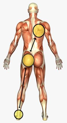 How the kinetic chain through the body flows